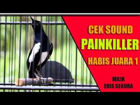 Cek Sound Kacer Juara 1 Lokal Bakalan Nasional | Kacer PAINKILLER Milik Eris Sekura