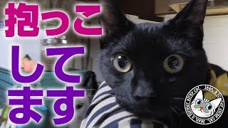 【Jean & Pont 701】もうすぐハロウィン 事件の夜何か不穏な空気が 2017/10/26 保護猫育成記録  Jean & Pont thumbnail