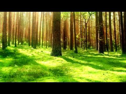HD-Relaxing Celtic Music - Irish Forests - Relax, Sleep, Study, Meditation.mp4