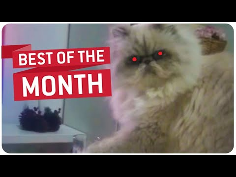 Best Videos of the Month Compilation    February 2015 JukinVideo