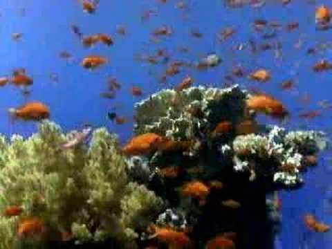 Coral Reef Biology