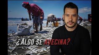 ESTA ES LA RAZÓN POR LA QUE APARECIERON MILES DE PECES EN ECUADOR