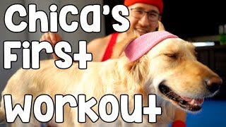 CHICA'S FIRST WORKOUT
