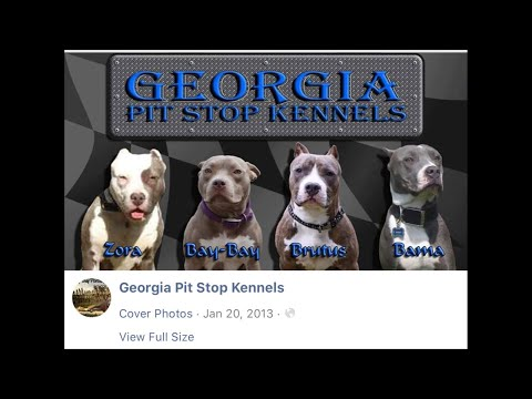 Georgia Pit Stop Kennels aren't American Pit Bull Terriers. The Mislabeling Dog Breeds need stop.