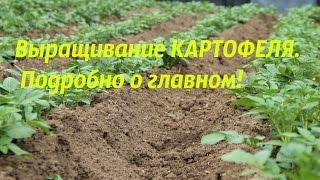 видео Посадка и выращивание картофеля.