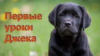Дрессировка щенка. Первые упражнения. Чему учить щенка.