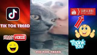 Funny Cute Animals  Animal Kingdom Videos 21 Funny