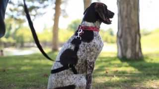 Train Your Dog To Stop Pulling On Leash