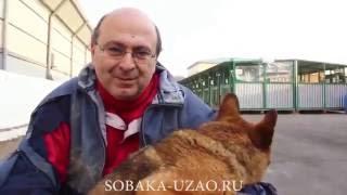 Что привело нас в приют для животных? Приют Щербинка ЮЗАО SOBAKA-UZAO.RU
