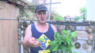 Shqiptari që ushqehet me hithi, fik cigaren dhe hekurin e nxehtë përmes gjuhës
