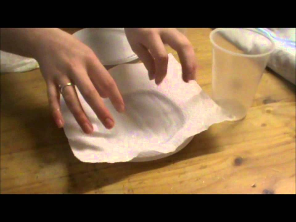 Paper towel experiment conclusion