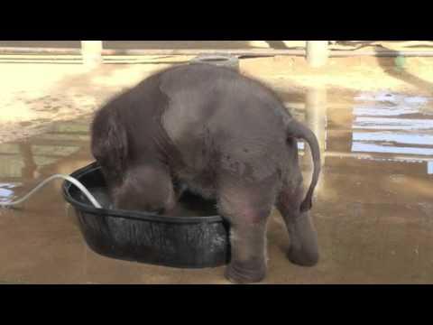 слониха слоненок и слон устали стоять в зоопарке mp3