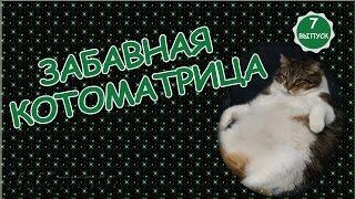 ***Забавная котоматрица***