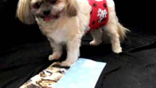 BELLY BANDS - diapers for male dogs