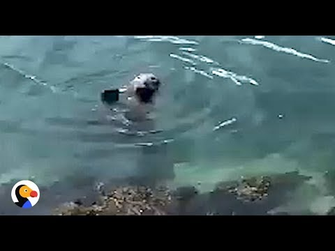CUTEST Seal Waves To Family | The Dodo