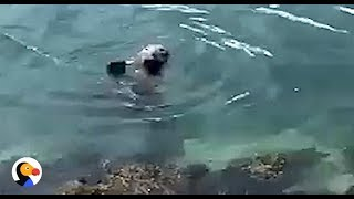 CUTEST Seal Waves To Family