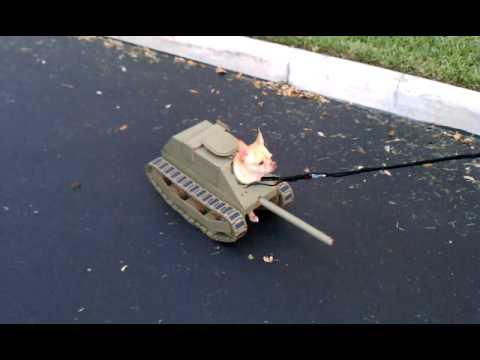 כלב טנק