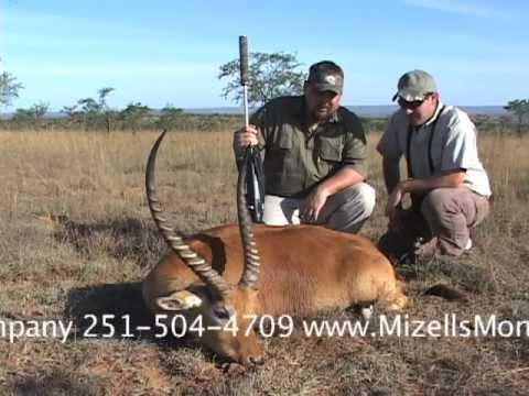 Lechwe Antelope Hunt In South Africa With The Hunting Company