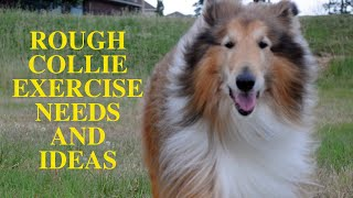 Rough Collie Exercise [Needs and Ideas]