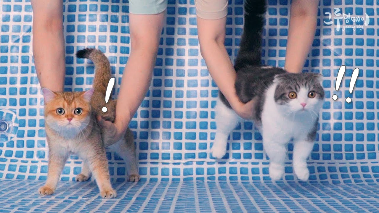 수영장을 처음 본 고양이 찐반응 ㅋㅋㅋㅋ