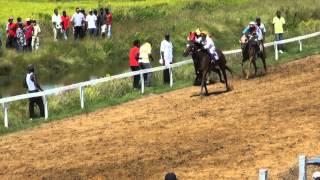Kennard Memorial Turf Club-Bush Lot Turf Club Farm Berbice-Guyana Horse Racing.