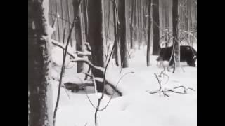 Охота на кабана, кто охотник?