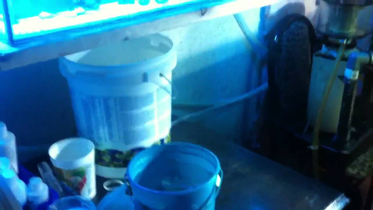 How to amazing cheap DIY ATO auto top off new salt water tank filtration  best upgrade