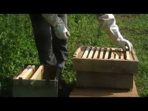 Cambridge CropShare gets bees!