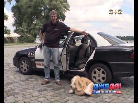 Що потрібно знати, коли хочеш перевезти тварину в авто