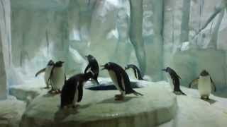 Penguins @ Ocean Park, Hong Kong