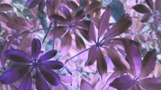 José González - Leaf Off / The Cave (Lyric Video)