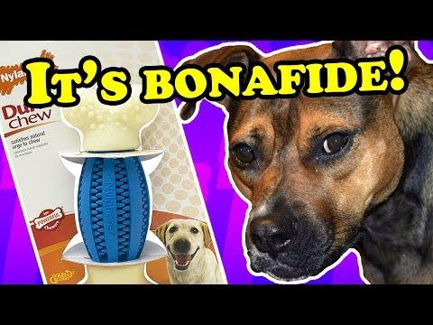 huge-nylabone-chew-toy---dog-toy-reviews-|-nylabone-durachew-double-action-bone-chew-toy