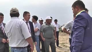 День поля отпраздновали в Камыстинском районе
