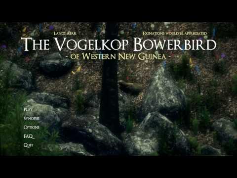 Vogelkop Bowerbird - симулятор альфа самца-птички (в мире животных)