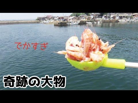 ゆでた海老を大量に撒いたら想定外の大物出現!