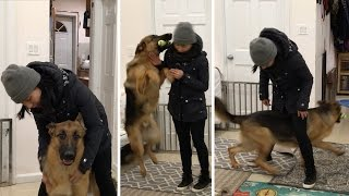 Dog Excited To See Owner After Weeks Apart