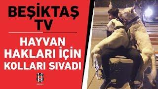 Beşiktaş TV, Hayvan Hakları İçin Kolları Sıvadı