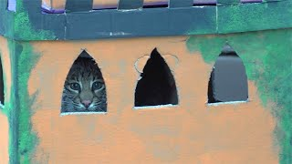 A Bobcat And His Castle