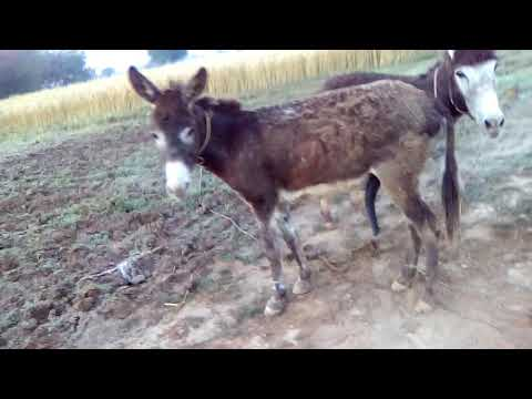 Sexy donkey meeting first time 2019.