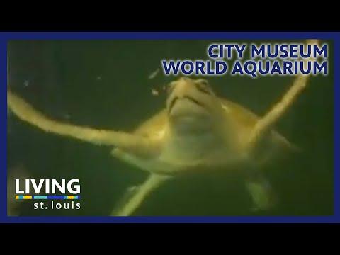 Ketc Living St Louis City Museum World Aquarium Youtube