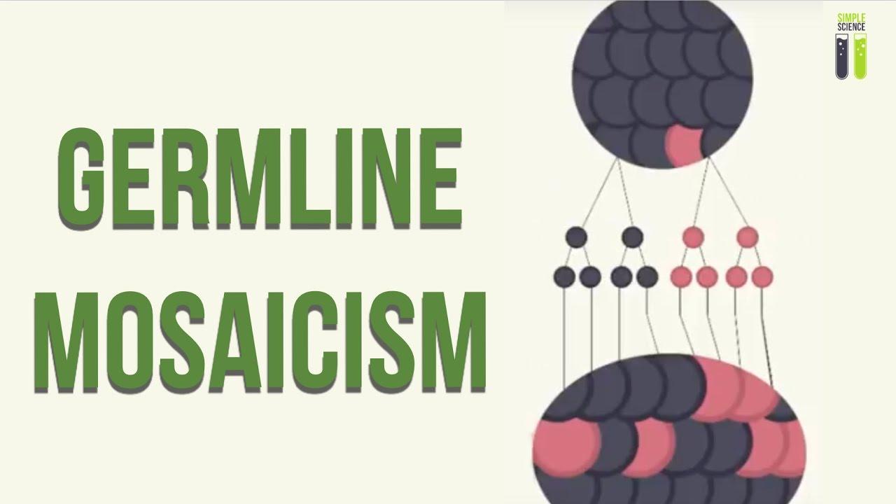 genetic mosaicism - photo #19