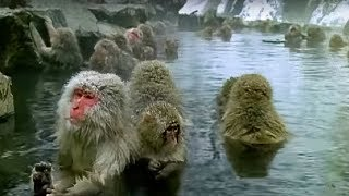 Monkey Health Spa - Cousins - BBC thumbnail