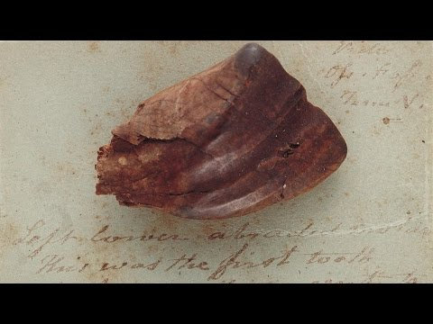 Iguanodon tooth
