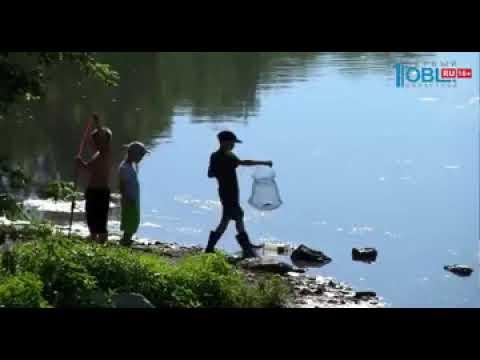 Жители жалуются на мёртвую рыбу в Миассе