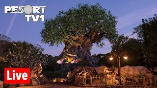 🔴Live: Disney's Animal Kingdom Live Stream - 8-10-18 - Safari, Pandora, & More!