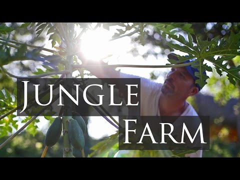 Organic Farming in the Jungle of Mexico