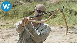 Taipan die gefährlichste Schlange der Welt (360° - GEO Reportage)
