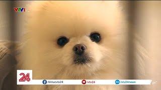 Người Hàn Quốc nuôi thú cưng thay con nhưng 'đứa trẻ' sẽ 'ra đi' trước bố, mẹ | VTV24 thumbnail