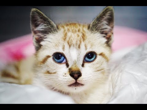 World´s cutest kitty is found dying with terrible injuries... WATCH THE END!