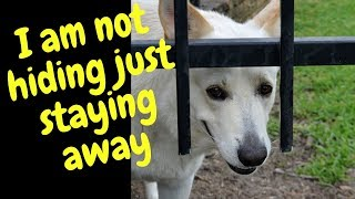 Don't Eat our Dog Cake relatives compilation~Funny Dog video~Animals Being Animals Series